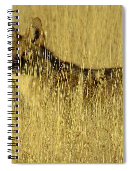 Coyote 4 Spiral Notebook