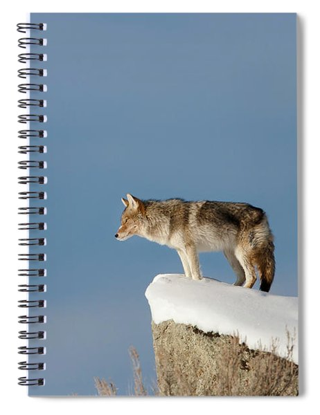 Coyote At Overlook Spiral Notebook