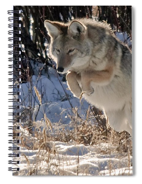 Coyote In Mid Jump Spiral Notebook
