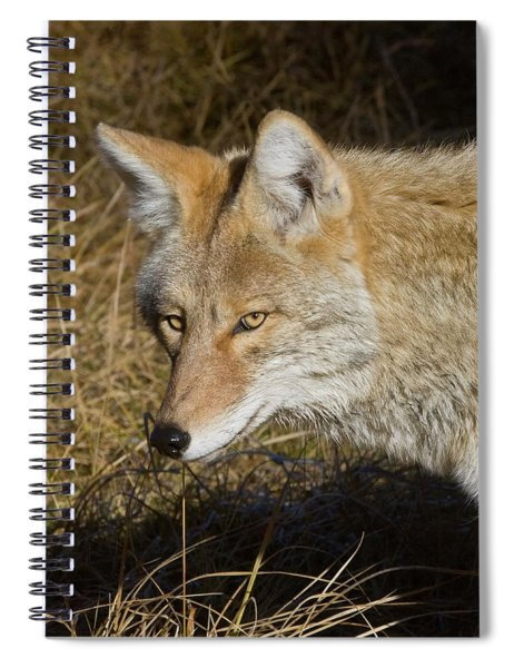 Coyote In The Wild Spiral Notebook