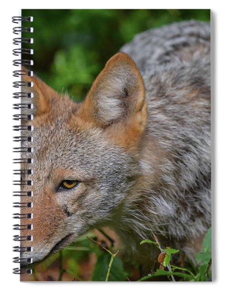 Coyote On The Hunt Spiral Notebook
