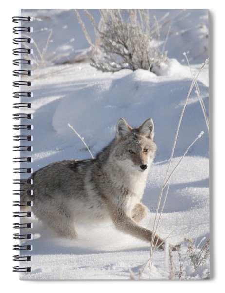 Coyote On The Move Spiral Notebook