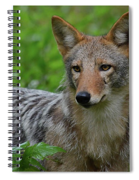Coyote On The Prowl  Spiral Notebook