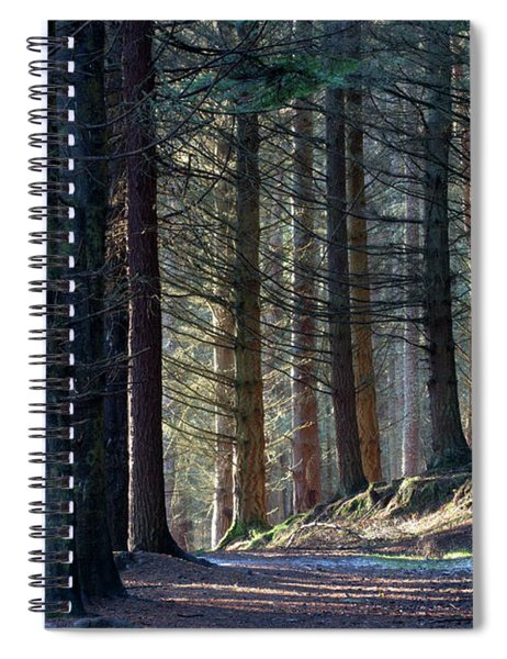 Craig Dunain - Forest In Winter Light Spiral Notebook
