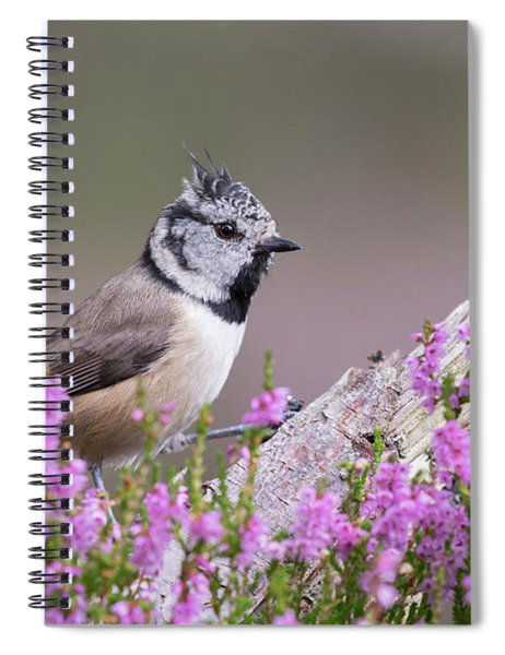 Crested Tit In Heather Spiral Notebook