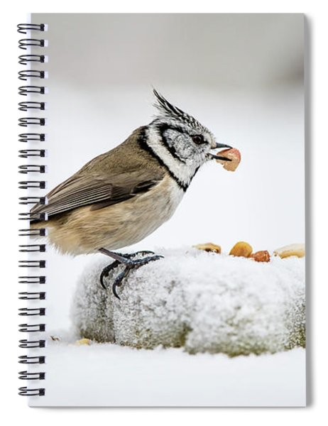 Crested Tit's Catch A Peanut Spiral Notebook