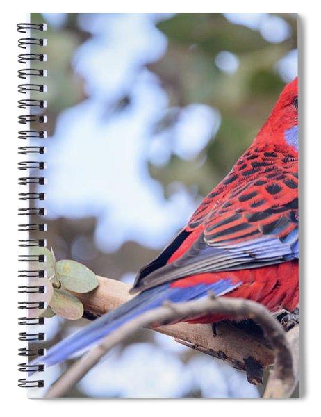 Crimson Rosella 03 Spiral Notebook