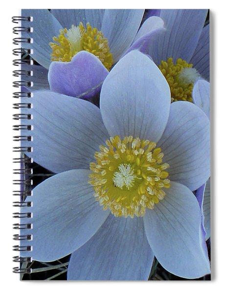 Crocus Blossoms Spiral Notebook