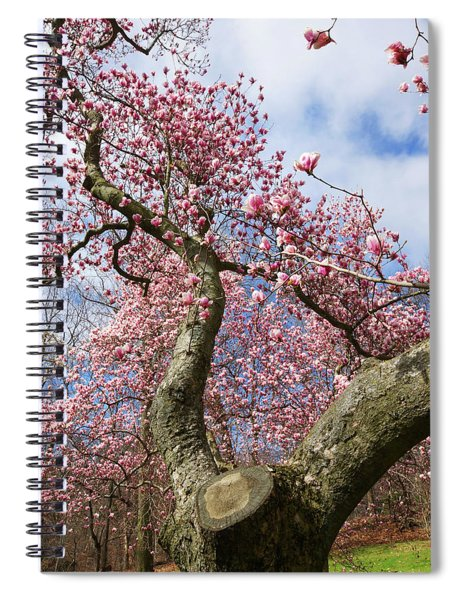 Crooked Magnolia Spiral Notebook