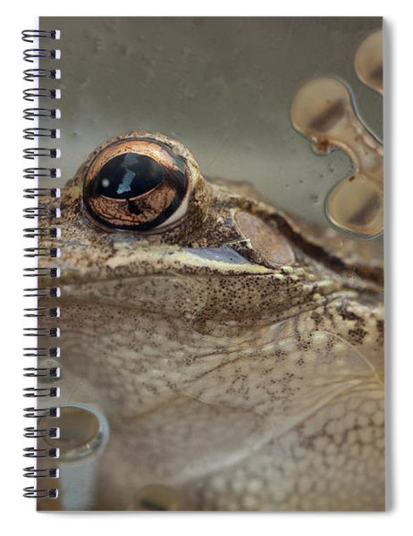 Cuban Treefrog Spiral Notebook