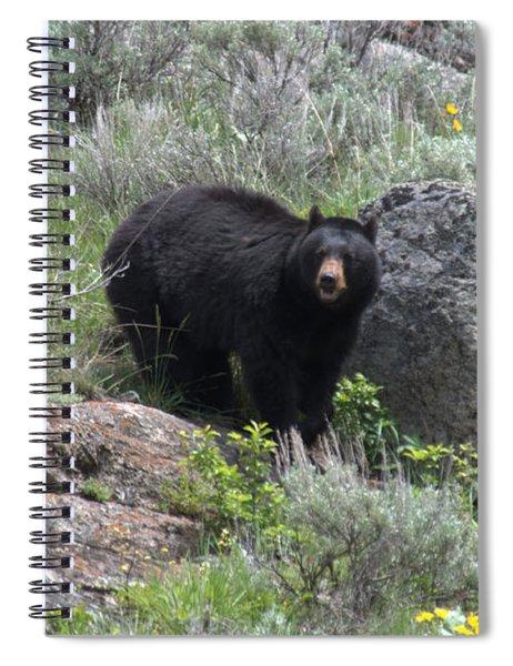 Curious Black Bear Spiral Notebook