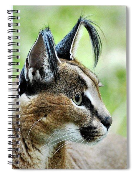 Curious Caracal Spiral Notebook