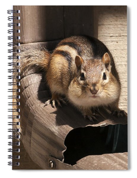 Curious Chipmunk Spiral Notebook