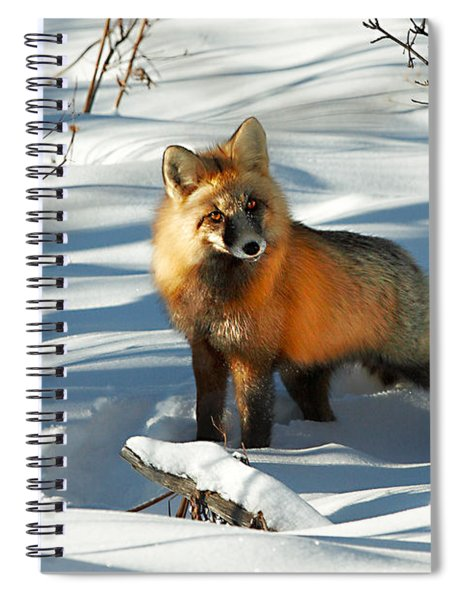 Curious Fox Spiral Notebook