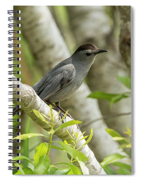 Curious Gray Catbird Spiral Notebook