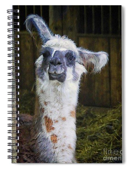 Curious Spiral Notebook