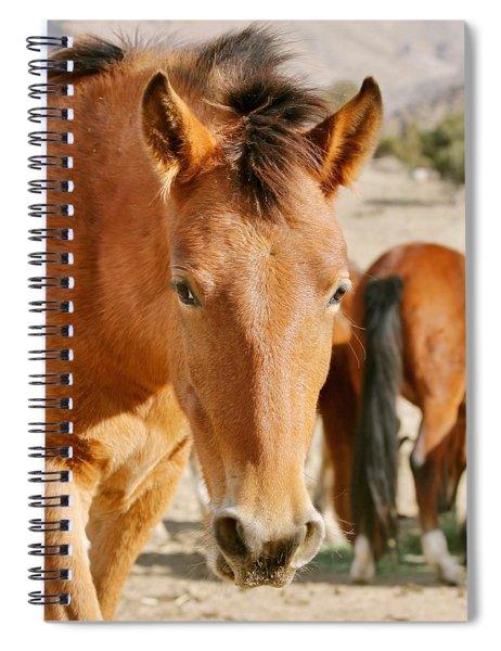 Curious Mustang Spiral Notebook