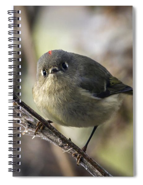 Curious Ruby-crowned Kinglet Spiral Notebook