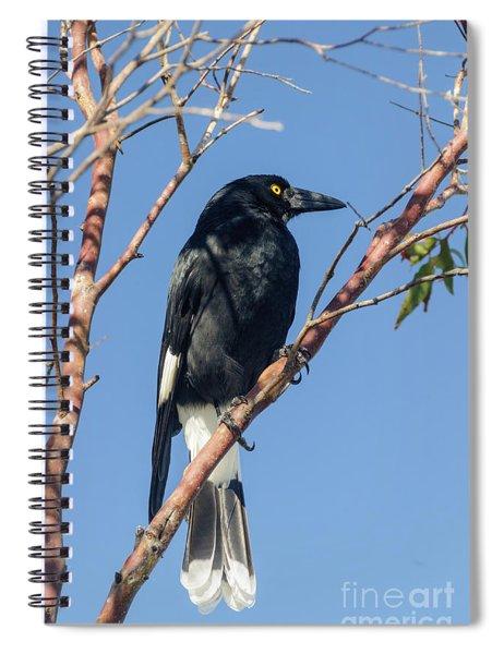 Currawong Spiral Notebook