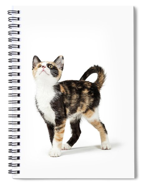 Cute Calico Kitten Looking Up Into Copy Space Spiral Notebook