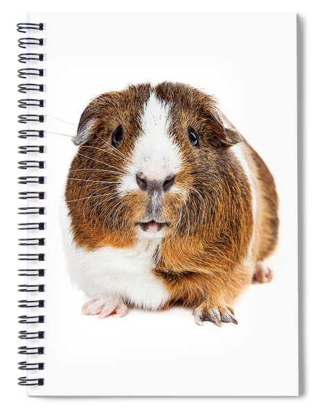 Cute Guinea Pig Looking Forward Spiral Notebook