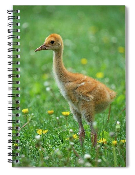 Cuteness Spiral Notebook