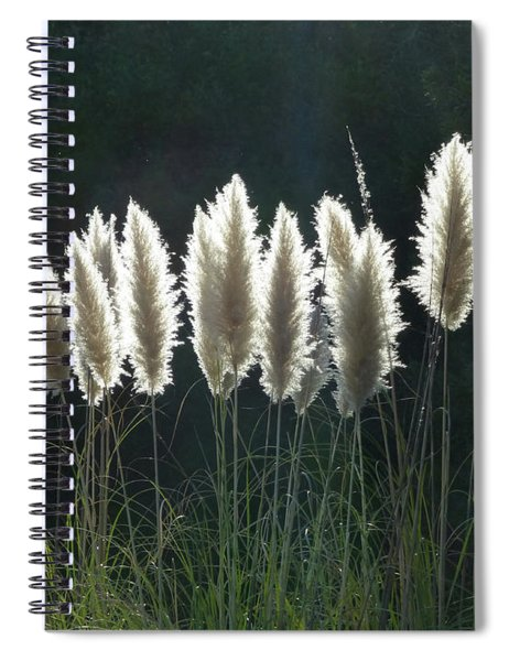 D8b6302 Pampas Grass At My Home Spiral Notebook