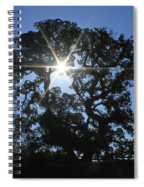 D8b6305 Sunburst Through Large Oak Jack London State Historic Park Spiral Notebook