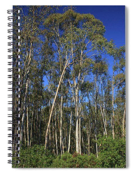 d8b6307 Eucalyptus Trees Jack London State Park Spiral Notebook