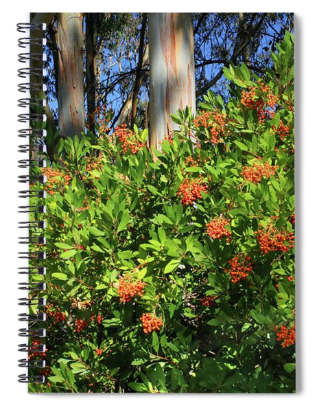 D8b6308 Toyon Plant Aka Christmas Berry Spiral Notebook