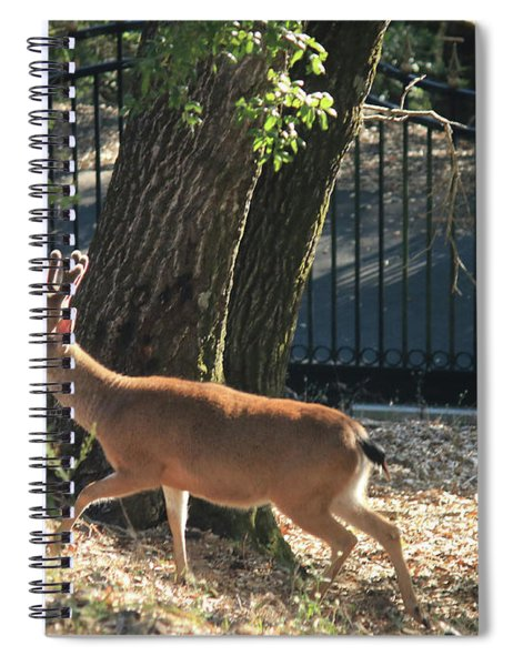 D8b6336 8 Point Buck At Our Home Ca Spiral Notebook