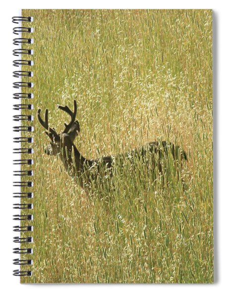 D8b6337 Mule Deer Buck In Field Ca Spiral Notebook