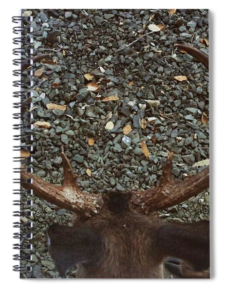 D8b6352 8 Point Buck Sonoma Ca Spiral Notebook