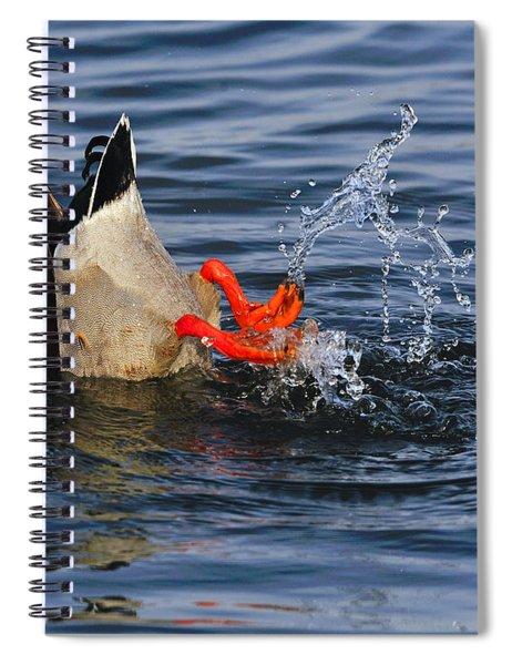 Dabbling - Mallard Spiral Notebook