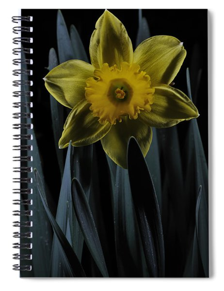 Daffodil By Moonlight Spiral Notebook