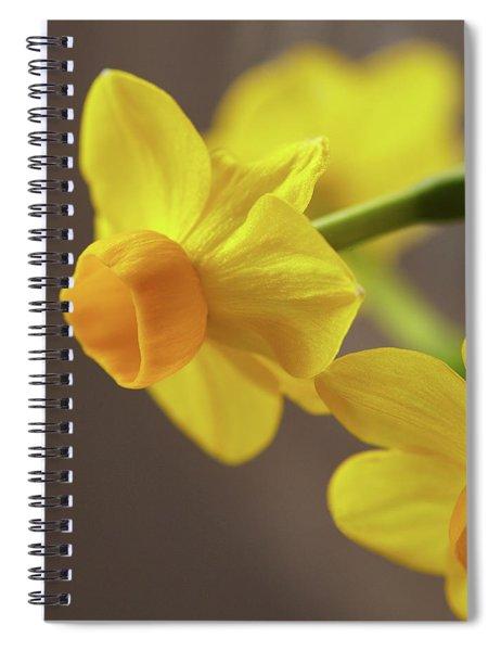 Daffodil Sunrise Spiral Notebook