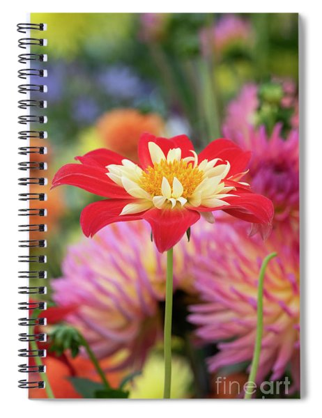 Dahlia La Gioconda Spiral Notebook
