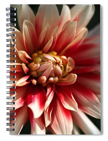 Dahlia Warmth Spiral Notebook