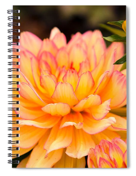 Dahlias In The Garden Spiral Notebook