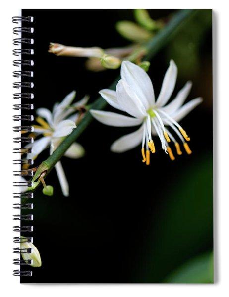Dainty White Spiral Notebook