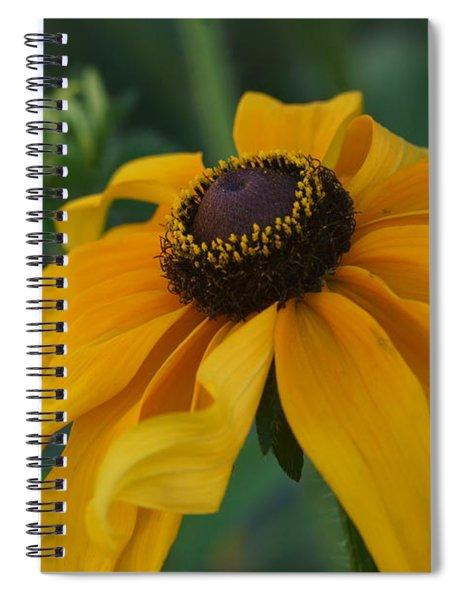 Daisy 3 Spiral Notebook
