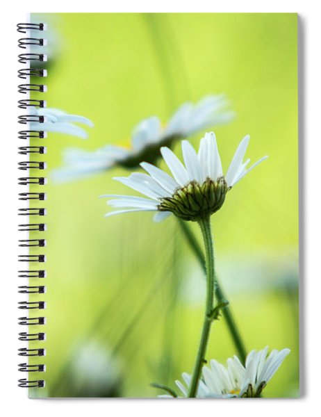 Daisy Collection  Spiral Notebook