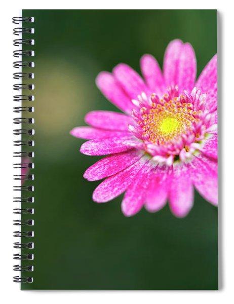 Daisy Flower Spiral Notebook by Pradeep Raja Prints