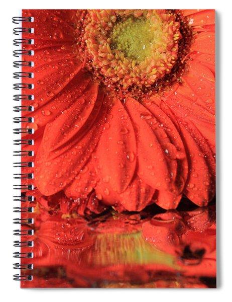Daisy Reflections Spiral Notebook