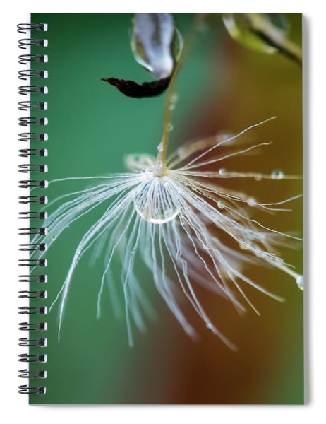 Dandelion Water Drop Macro 2 Spiral Notebook