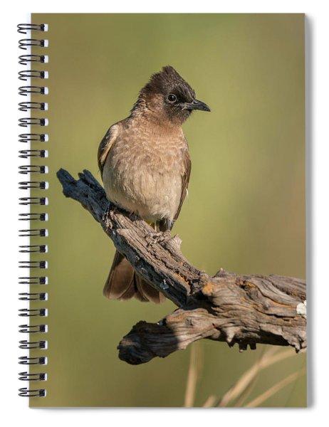 Dark-capped Bulbul Spiral Notebook