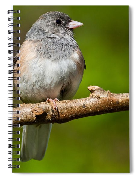 Dark Eyed Junco Perched On A Branch Spiral Notebook