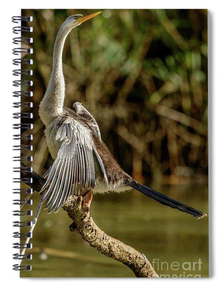 Darter 01 Spiral Notebook