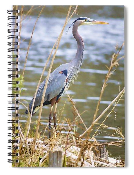 De Leon Springs Blue Spiral Notebook