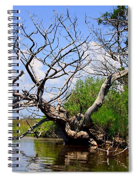 Dead Cedar Tree In Waccasassa Preserve Spiral Notebook